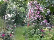 Gartenpraxis: Rosen - Schnitt und Pflege, 8020 Graz  5. (Stmk.), 05.04.2014, 14:30 Uhr