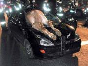Ois was klana is wie a Pferd ko ma dafian!!!! von MCHoima