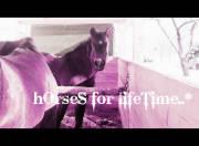 *Horses 4 Lifetime* von vrOniiii