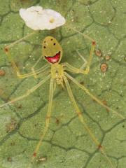 die spinne hat bestimmt noch mehr angst vor dir ^^ -FALSCH! von Jenny