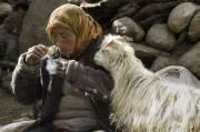 """""""Ladakh - Ein Reiseabenteuer in Kleintibet"""" von Harald Schaffer, 6300 Wörgl (Trl.), 20.01.2015, 20:00 Uhr"""