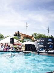 Hundetag Baden  So. 05.juni 2016 von 10-18 Uhr  Trabrennbahn Baden, 2500 Baden (NÖ), 05.06.2016, 10:00 Uhr