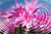 Kurs Pranic Energy Healing Stufe 1, 1120 Wien 12. (Wien), 24.05.2014, 09:00 Uhr