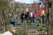 Gartenpraxis Rosen: Schnitt und Pflege, 8020 Graz  5. (Stmk.), 04.04.2015, 14:30 Uhr