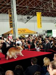 10 Jahre Haustiermesse Wien - 25 26.2.2017 MARX Halle, 1030 Wien,Landstraße (Wien), 25.02.2017, 10:00 Uhr