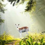 Nature Feeling bestellen!