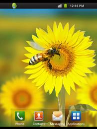 Screenshot von Warm Nature