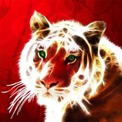 Tiger Glow bestellen!