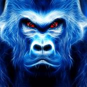 Wild Gorilla bestellen!