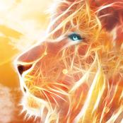 Lion King bestellen!