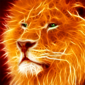 Amazing Lion
