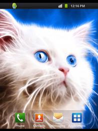 Screenshot von Sweet Cat