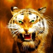 Tiger Design bestellen!