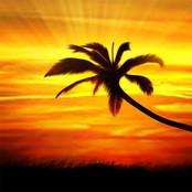 Sunset Palm bestellen!