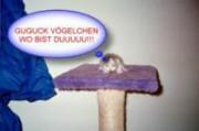 Shelpy, 8530 8530 Schwanberg